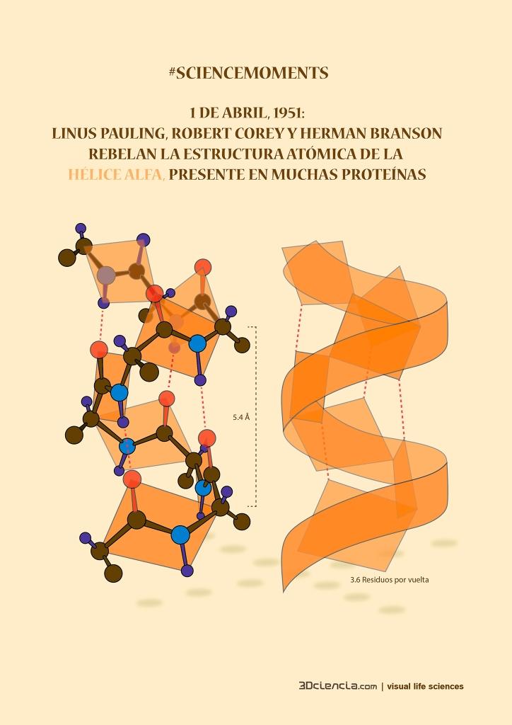 alfa helice estructura proteinas 1951 linus pauling corey branson science moments 3dciencia